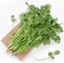 Real 200pc Coriander Organic Cilantro Chinese Parsley vegetable Seeds Green Leaf