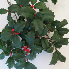 FRESH LIVE Watered AMERICAN HOLLY BOUGHS/CUTTINGS