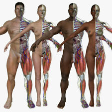 Interactive 3D Anatomy Series Complete Human Anatomy 2,93 gb