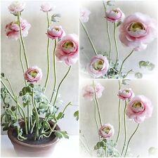 Ranunkel 56cm rosa im Topf- künstliche Blumen Pflanze Kunstpflanzen Kunstblumen