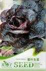Original Package 30 Purple Leaf Lettuce Seeds Lactuca Sativa Vegetable Seed C148