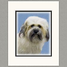 Havanese Dog Original Print 8x10 Matted to 11x14