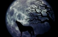 "perfect  36x24 oil painting handpainted on canvas ""wolf,moon,tree""@N315"