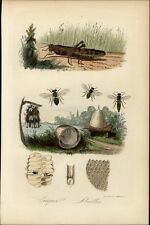 Abeilles Bees hives honey comb patterns Crickets 1854 lovely rare antique print