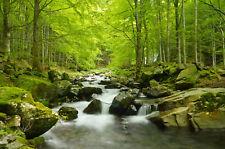 VLIES Fototapete-WALD BACH-(60V)-Bäume Natur Pflanzen Fluss See Wasserfall Wand