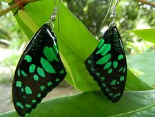REAL LIME Butterfly above Wings Earring Jewelry 925 sterling Hook