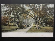 Hampshire NEW FOREST Road to MINSTEAD c1906 by F.G.O. Stuart 798