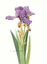 Floral Iris Note Cards, Set of Five 5 x 7 Blank Watercolor Reproductions