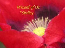 RED Wizard of OZ Somniferum Poppy Seeds 2000+  *Shelley aka PoppyQueen👑