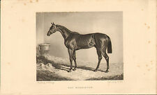 "1840s print of a race horse called "" bay middleton  ""  by f.j.herring"