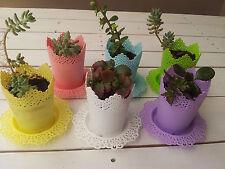 Home Decor plastic flower pots n plates with succulents (12 pieces)