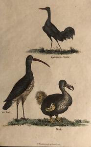 1815  Antique Hand Coloured Bird Print : Dodo, Common Crane & Cerlew Ornithology