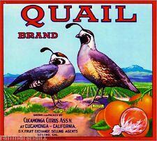 Cucamonga Upland Quail #3 Orange Citrus Fruit Crate Label Art Print