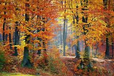 AUTUMN WOODLAND TREES CANVAS PICTURE POSTER PRINT WALL ART UNFRAMED 2016