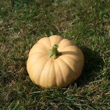 Kings semillas-calabaza, Butternut Corona de otoño F1 - 15 semillas