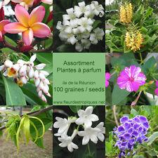 Assortiment de plantes a parfum - Lot de 100 graines