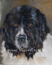 More details for sale newfoundland signed dog print by susan harper unmounted