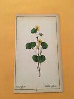 KS) 1878 Botanique Pratique Viola Biflora Flower Botany Original Colored Print