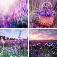 400Pcs Beautiful Lavender English Seeds Organic Untreated Herb Seeds Home  New.