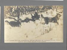 pk28005:Real Photo Postcard-5 Wolves Poisened by Archie Brooks,McConkey,Ontario