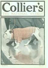 Bulldog  -  by Frances Rogers  -  Collier's   -  Cover Only -  No Label  -  1911