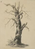 Unb.Künstler, Bemooster Baum, Anfang , Lithographie