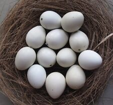 READY TO SHIP 14 (12+2 spares) Blown Empty Jungle Bush White Quail Eggs 1 Hole
