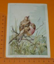 CHROMO BON-POINT ECOLE 1895-1914 OISEAUX BIRDS LINOTTE VULGAIRE