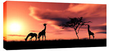 """X LARGE AFRICA SUNSET GIRAFFES CANVAS PICTURE  44""""x 20"""""""