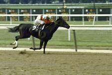 1975 Jacinto Vasquez RUFFIAN Belmont Park Coach Club Horse Racing 8x10 Photo 1