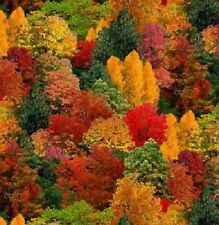AUTUMN TREES FOREST FALL LANDSCAPE FABRIC