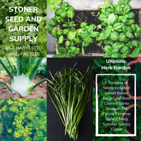 350+ Heirloom Herb Seed Variety 7 Pack Non-GMO USA Fresh Open Pollinated Seeds
