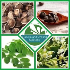 ✅ MORINGA OLEIFERA SEEDS - Fresh Organic Seeds - High Germination Rate