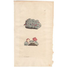 Sowerby antique 1st ed 1797 hand-colored engraving Pl 374 Pink Mushroom Lichen