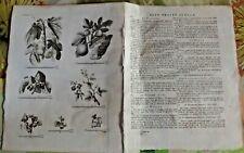 1784 Ancienne Gravure Estampes EO.le Figuier, Ronce,Groseillier épineux,Figuier
