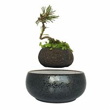 levitating potted plant floating air bonsai tree pot garden gifts