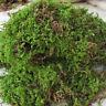 100 g Dried Artificial Reindeer Moss Nature Moss Terrarium Micro Landscape