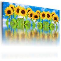 SUNFLOWERS YELLOW SUMMER FLOWERS FIELDS Canvas Wall Art Picture FL39 X  MATAGA .