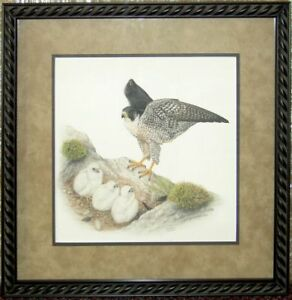 Framed Print Peregrine Falcon & Young Chicks on Nest Porter Family Wildlife Art