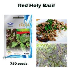 Thai Red Holy Basil Seeds Ocimum sanctum Herb 750 Seeds