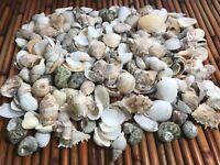 """Medium Mixed Seashells, Assorted Craft Shells Mix 1-2"""" 200+ pcs 1 Kilo Lot# 1013"""