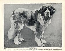 SAINT BERNARD NAMED WINNING BITCH OLD 1934 DOG PRINT