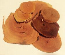 1 oz. Tongkat Ali Slices Red (Stema tuberosa) Wildharvested Indonesia