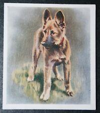 ALSATIAN  GERMAN SHEPHERD  Puppy   Original 1936 Textured Colour Card