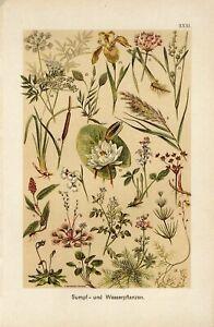 1890 WATER LILY VENUS FLY TRAP CARNIVOROUS PLANT Chromolithograph Print Martin