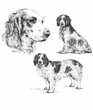 Welsh Springer Spaniel - 1963 Vintage Dog Print - Matted