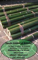 Canne di Bambù Bamboo ITALIANE, fresche, verdi, di varie dimensioni