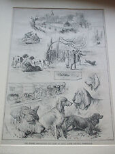 ANTIQUE PRINT 1883 THE KENNEL ASSOCIATION DOG SHOW ASTON GROUNDS BIRMINGHAM DOGS