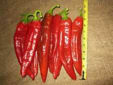 10 SEMI PEPERONCINO - BIG JIM