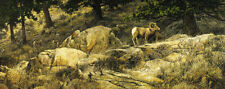 Stephen Lyman - The Long Autumn - Bighorn Sheep - Limited Edition Litho - MINT